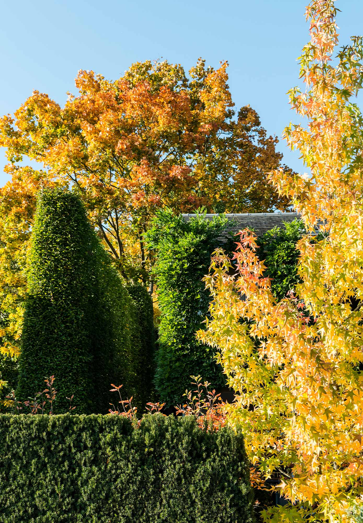 Deciduous trees, hedges and plants under a blue sky
