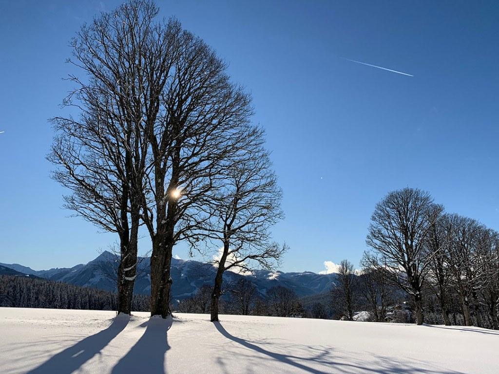 Natur im Schnee zum Jahreswechsel