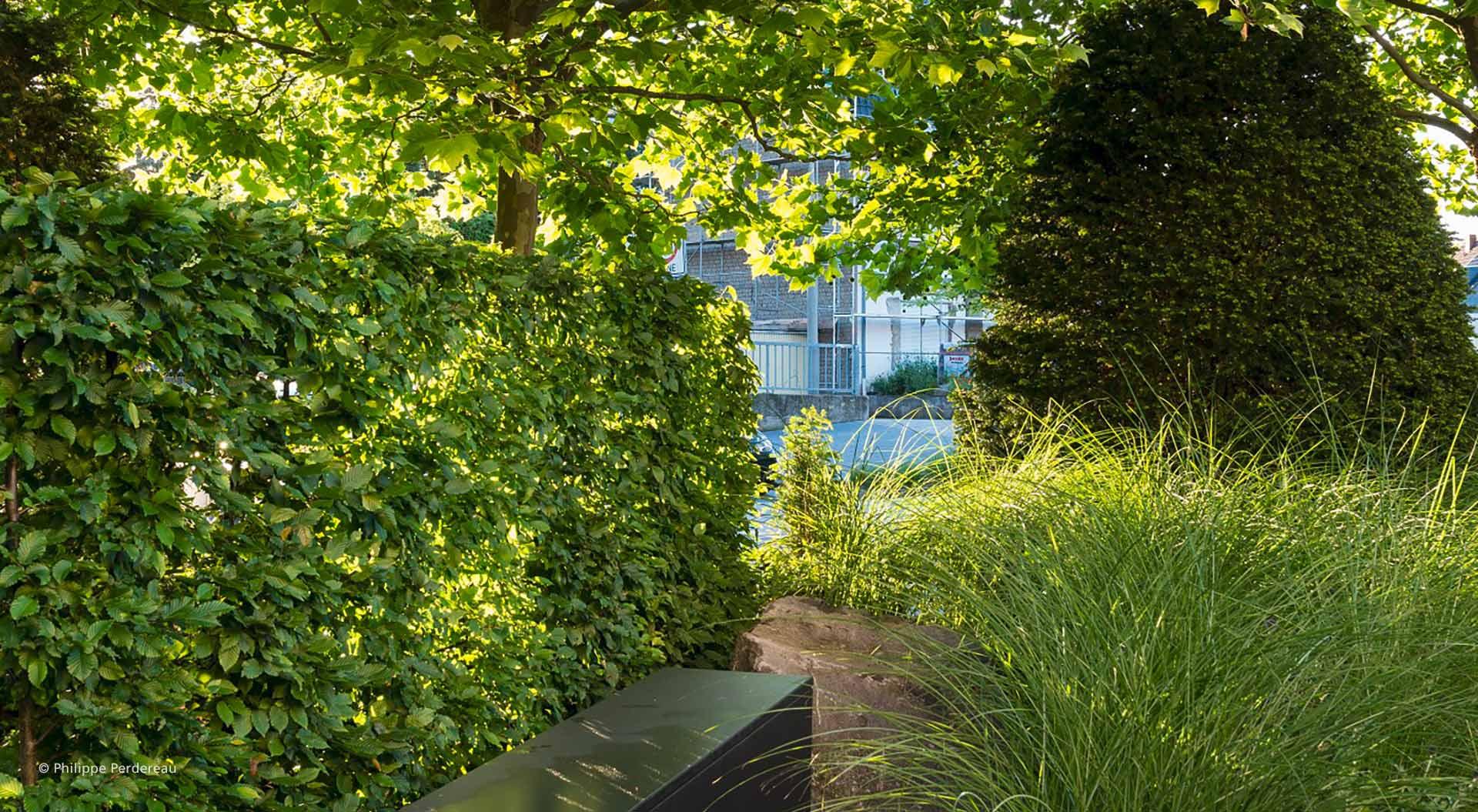 Saftig grüne Hecke mit Sitzbank in Firmengarten