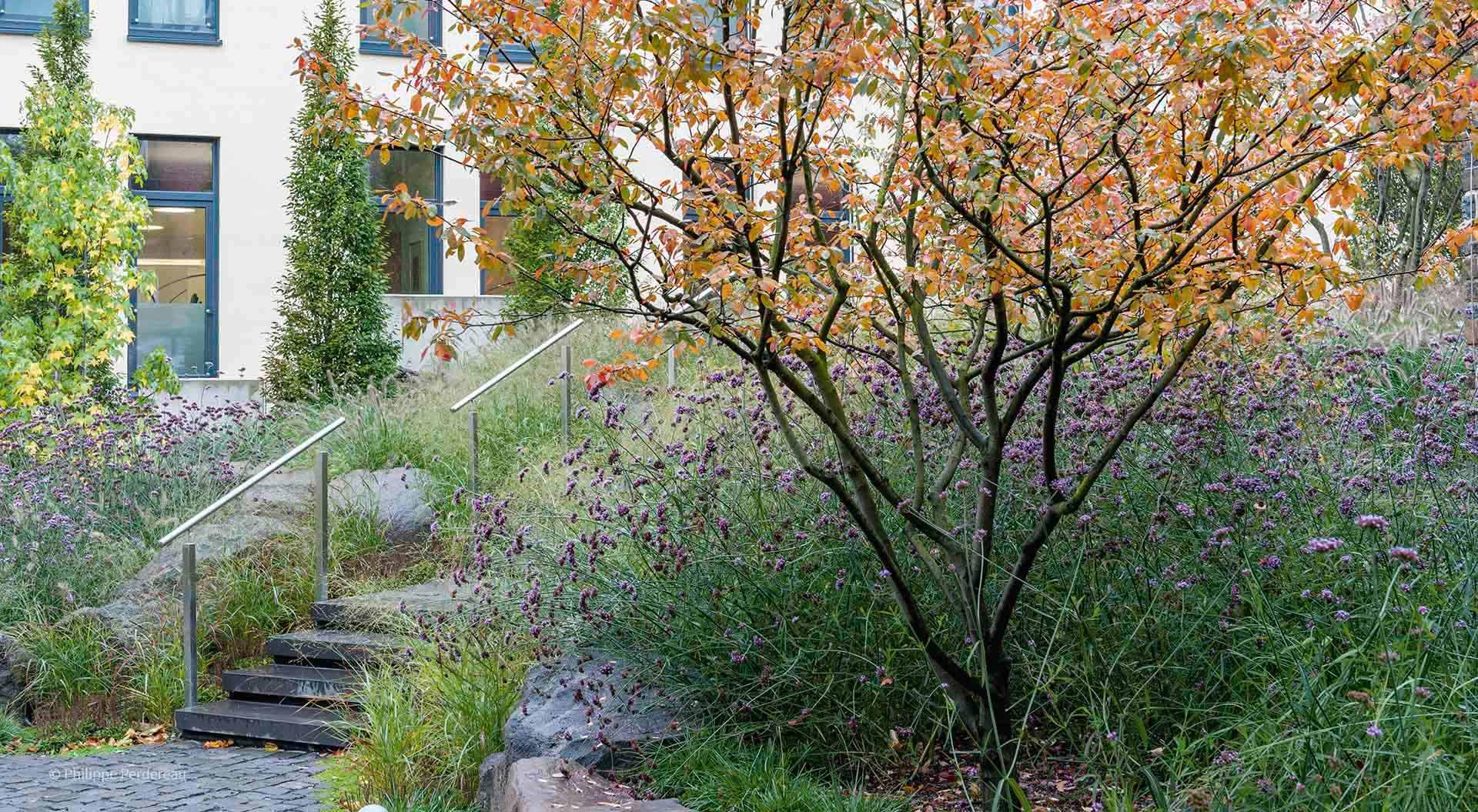 Treppe in Garten hinter Pflanzen