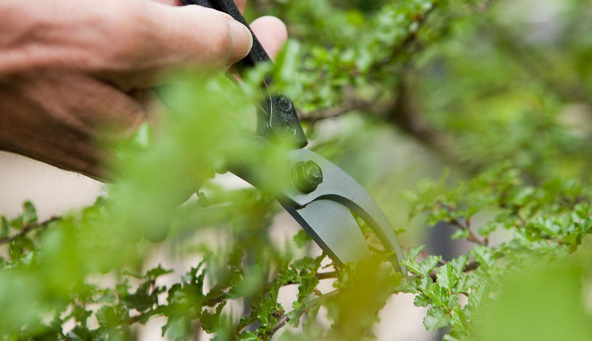 Nahaufnahme einer Gartenschere, welche von einer Person bedient wird