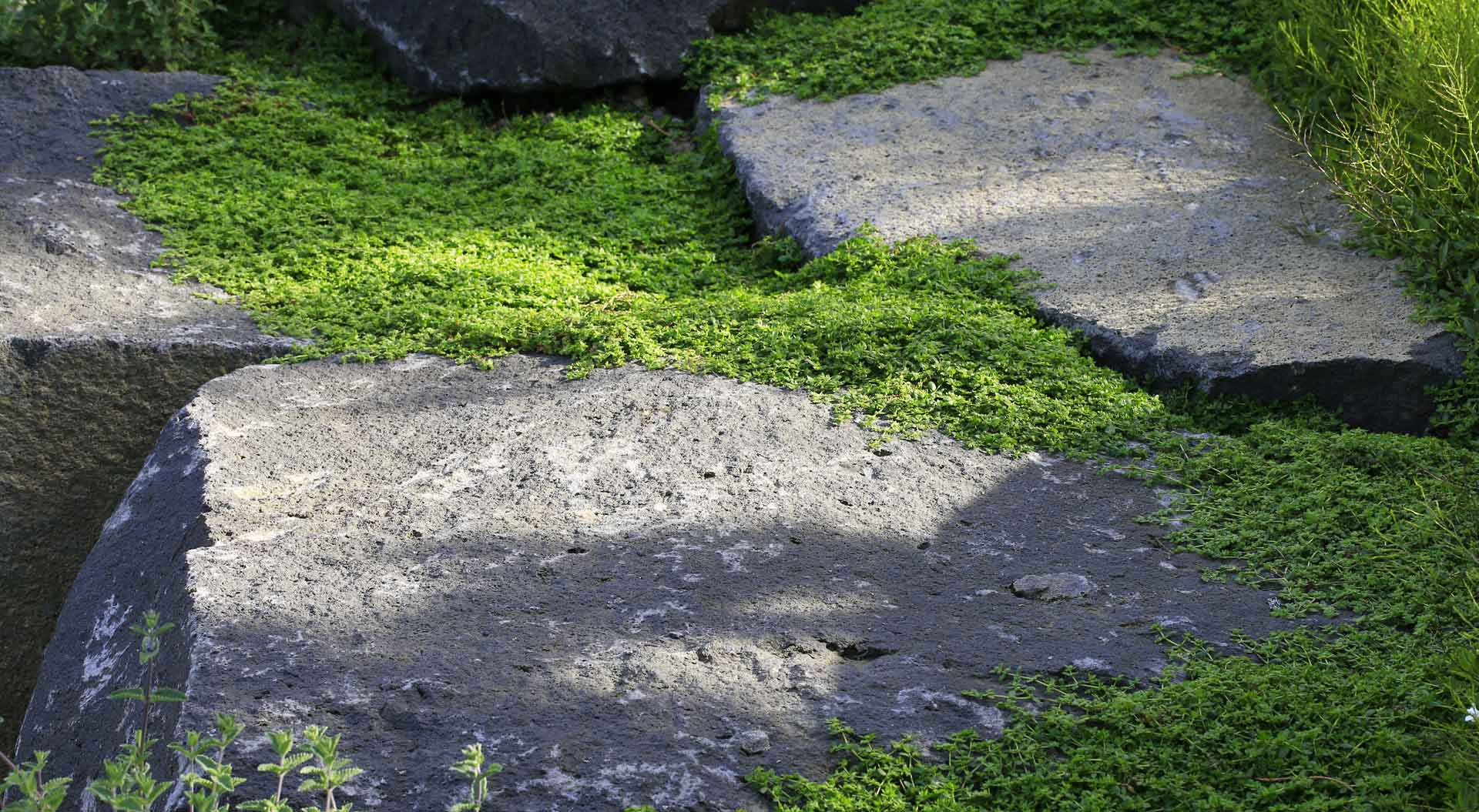Kombination aus Gras, Moos und Stein im Firmengarten