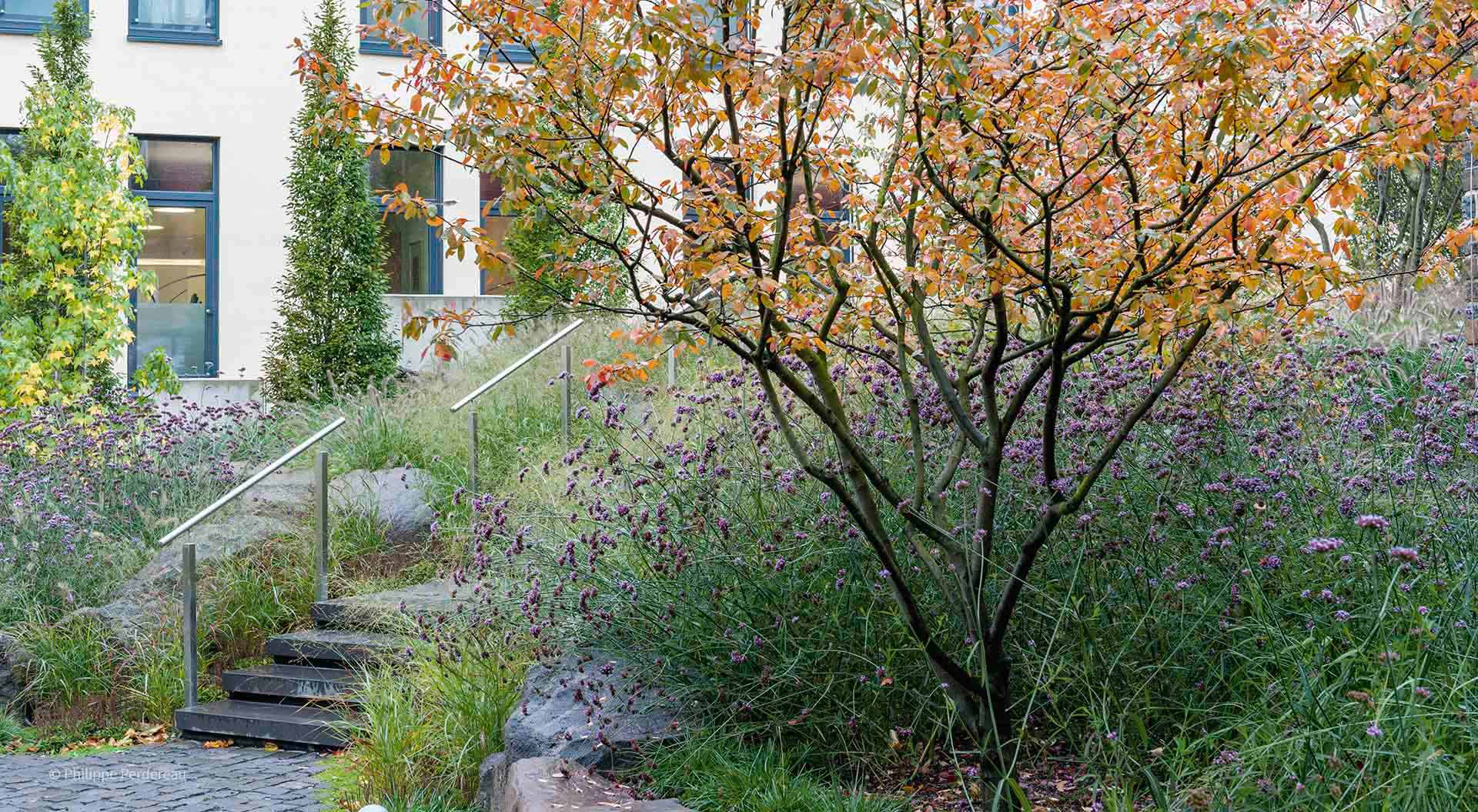 Company garden with a tree, many flowers and stone steps