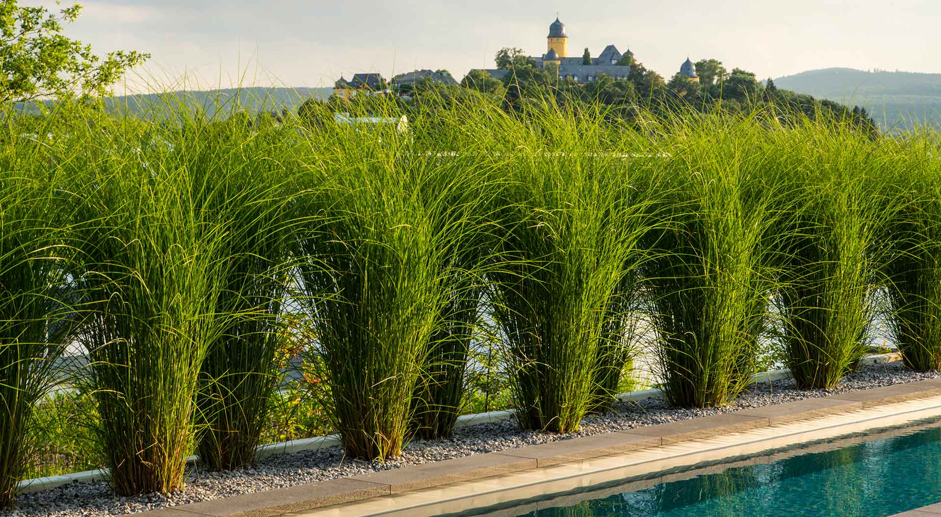 Grasses in a row in parallel to a pool