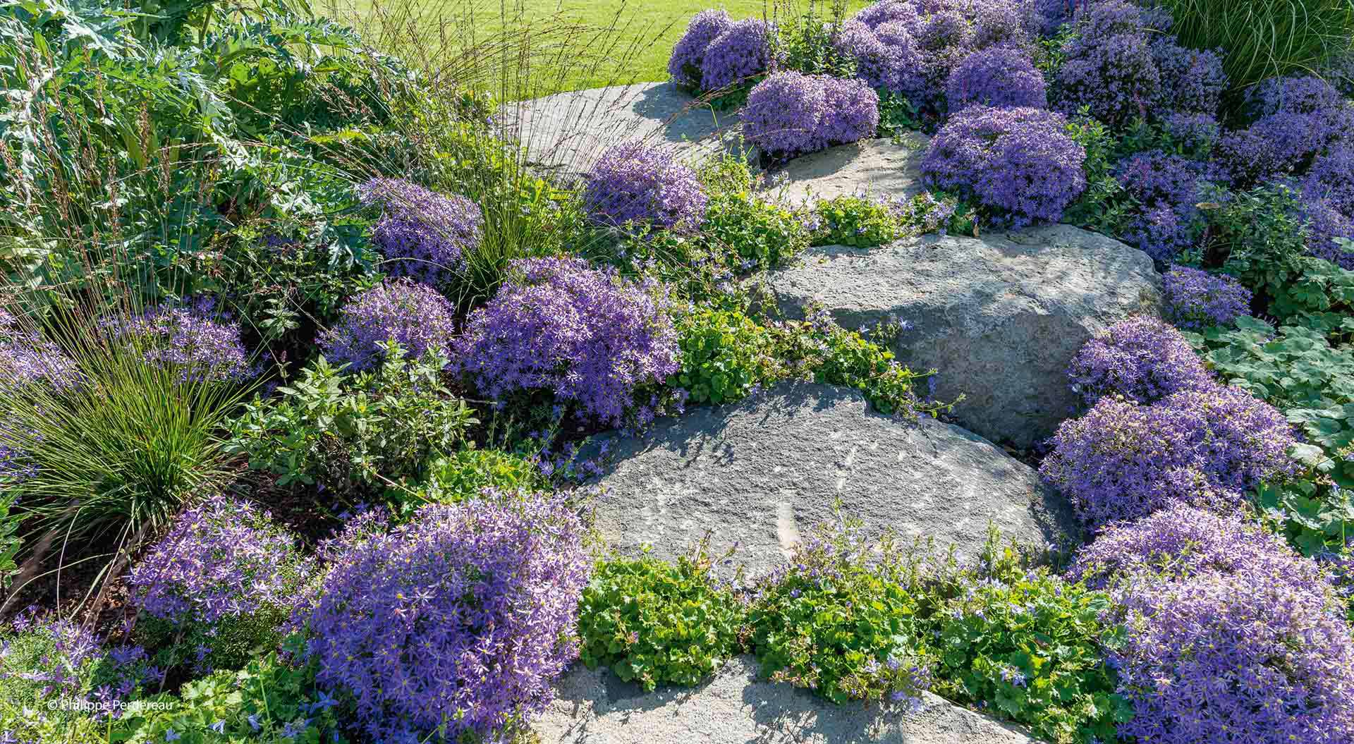 Purple flowers between natural stones for a nice look