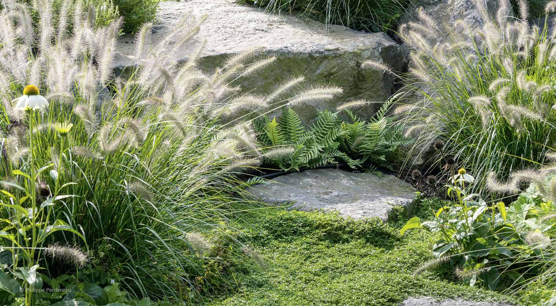 Grasses, plants, stones and moss combined in a garden