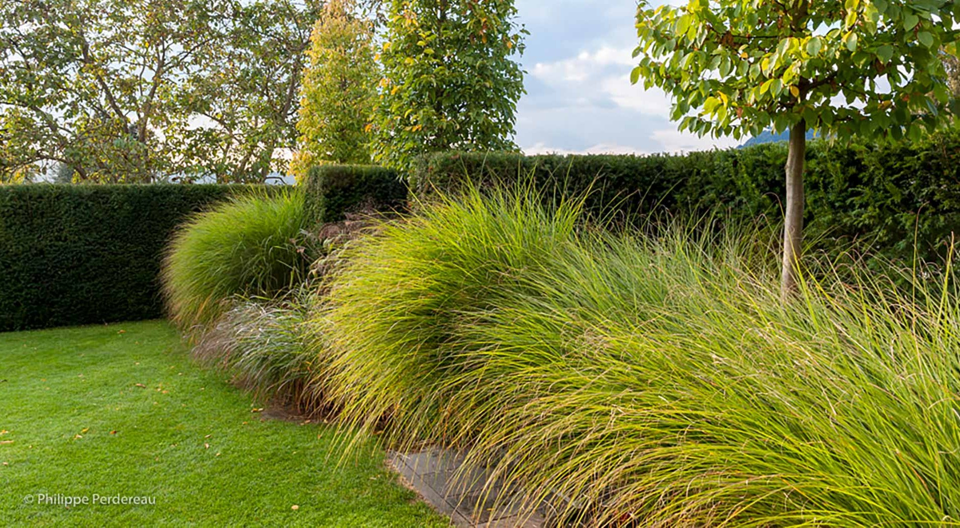 Grasses, hedges and trees as part of a garden