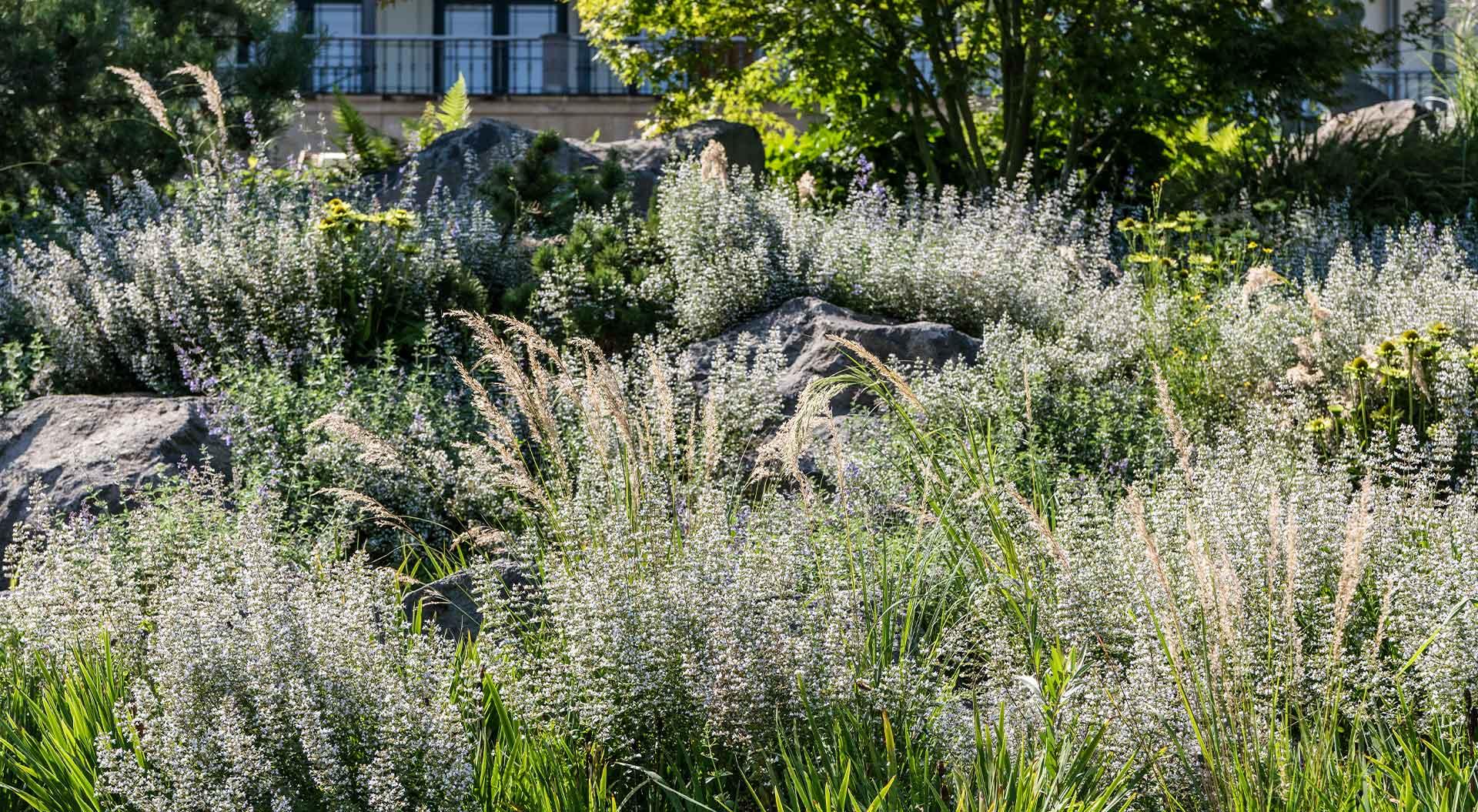 Sträucher, Blumen und Steine im Garten des Arp-Museums