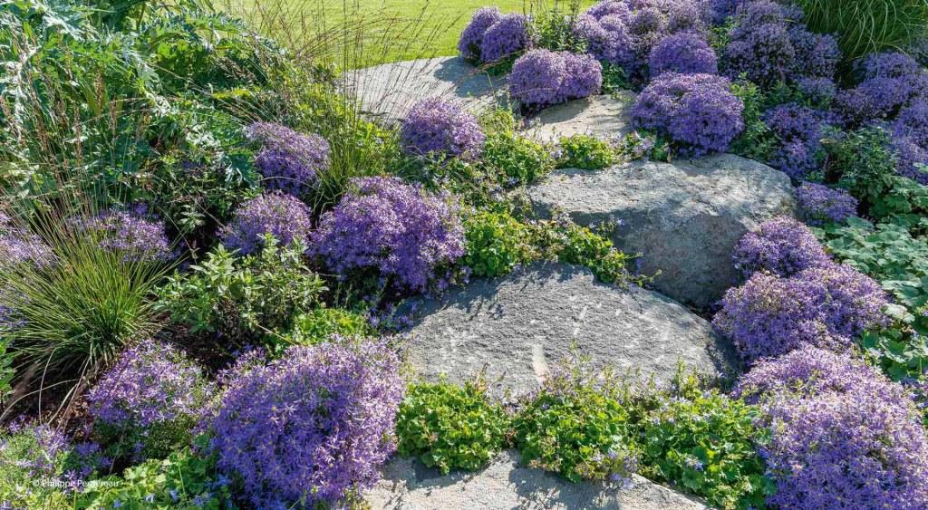 Farbenfrohe Blumen zwischen Steinen