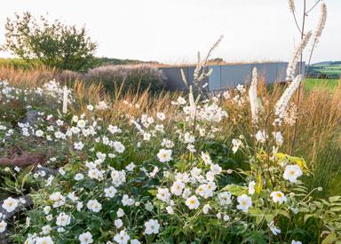 Gartenpflanzung mit einer Kombination aus Stauden und Gräsern sowie Gehölzen