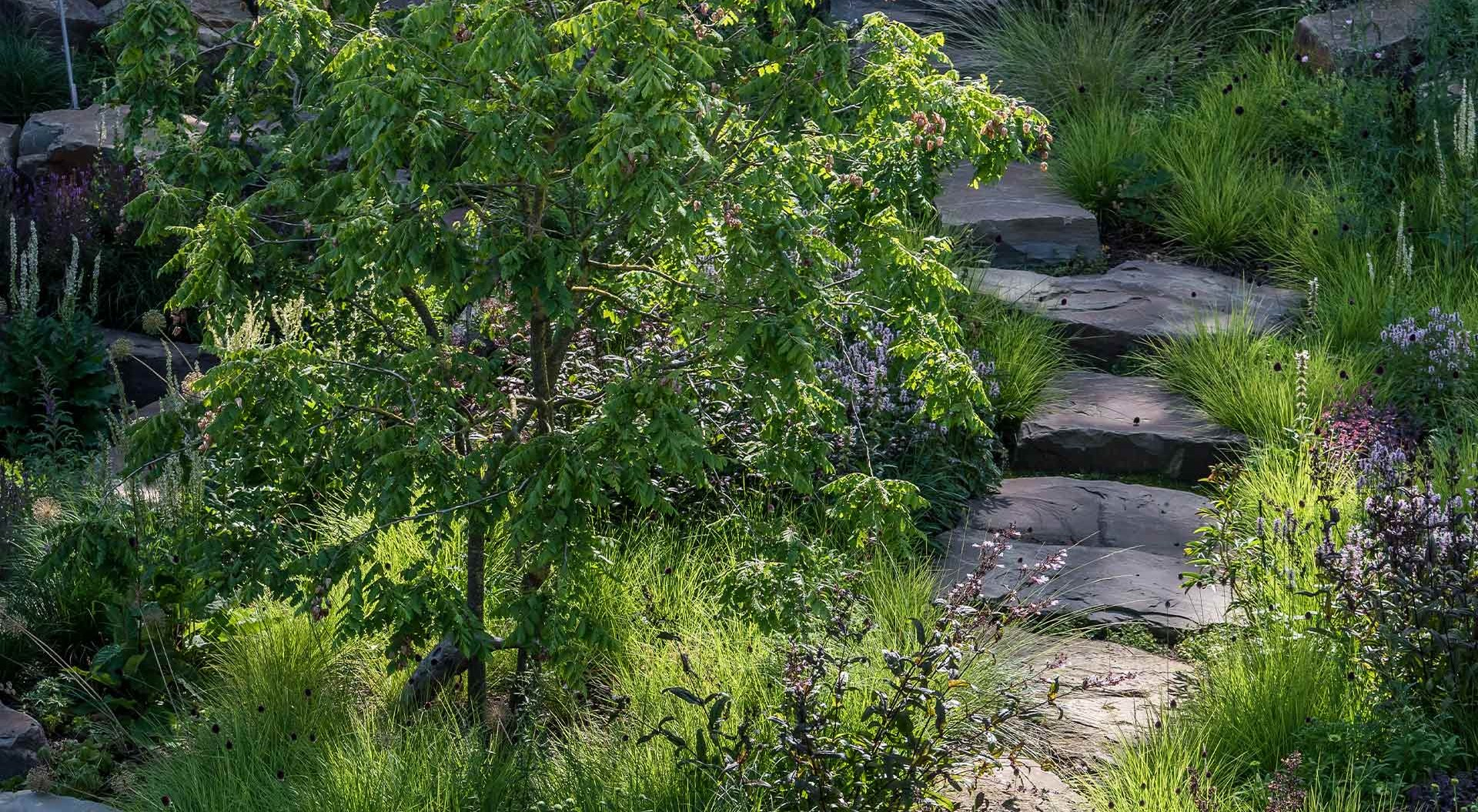 Natural stone stairs lead past plants through the green
