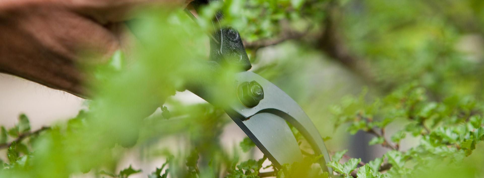 Gartenschere in Gebrauch zwischen Pflanzen