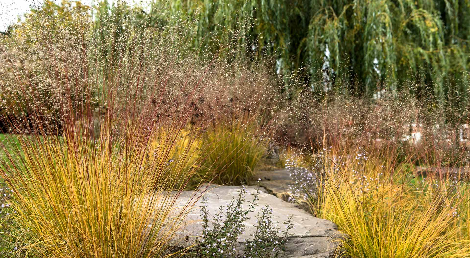 Detailed view on natural stones with plants
