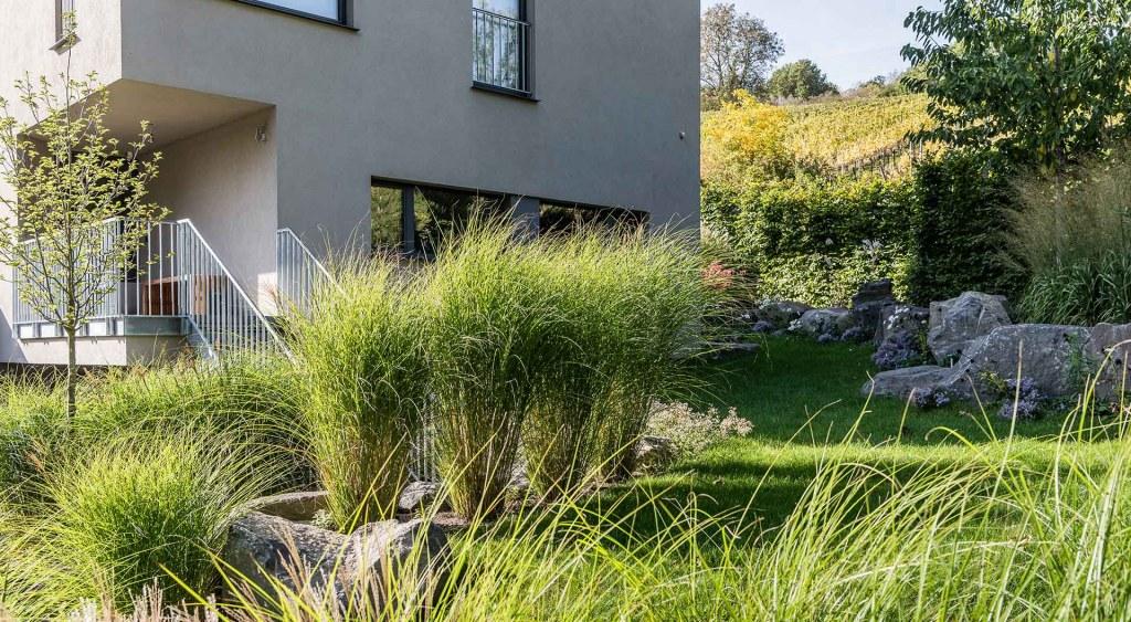 Sträucher vorm Haus grenzen den begehbaren Rasenbereich ab