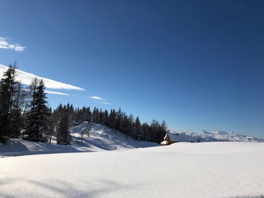 Schneelandschaft mit Tannenwäldchen bei strahlend blauem Himmel